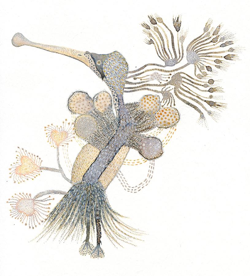"""""""""""Impossible bird"""" Acuarelas y tintas. 21,28 x 22,3 cm."""